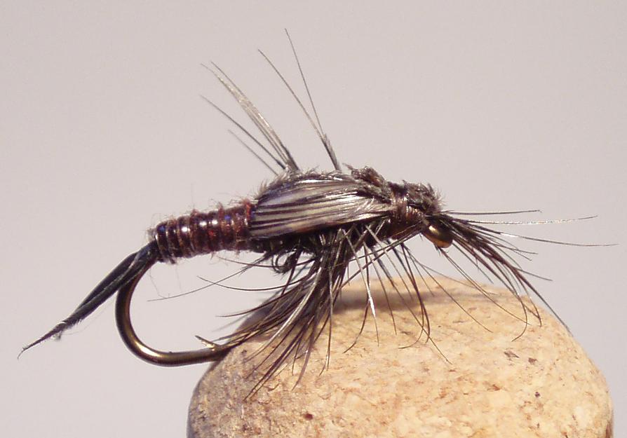 Smyth Stonefly