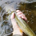 grand-river-ontario-brown-trout
