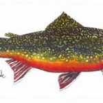 brooktrout3