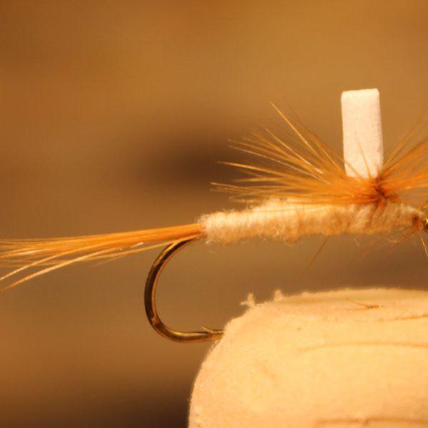 parachute-hendrickson-light
